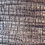 Coco palm detail bark texture — Stock Photo #50906805