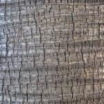 Coco palm detail bark texture — Stock Photo #50906923