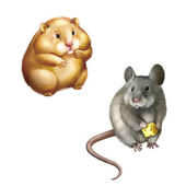Hamster and House mouse — Stock Photo