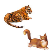 Tiger and Cat — Stock Photo