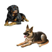German shepard dog and Rottweiler — Stock Photo