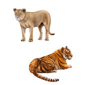 Tiger looking away and Lioness — Stock Photo