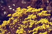 Yellow flowers — Stock Photo