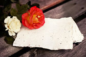 Beautiful red and white roses — Stock Photo