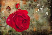 Red pink rose — Stock Photo