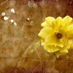 Beautiful Yellow Rose — Stock Photo #50957235