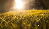 Orange green grass — Stock Photo
