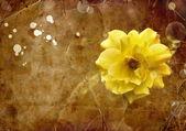 Όμορφο τριαντάφυλλο κίτρινο — Φωτογραφία Αρχείου
