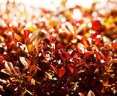 Red orange autumn leaves — Stock Photo