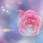 Beautiful pink rose — Stock Photo #51354437