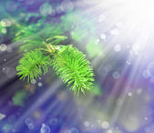 Green fir tree or pine branches — Stock Photo