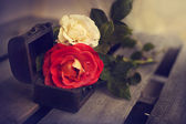 Beautiful red and yellow-white roses — Stock fotografie
