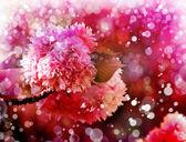 Fiori di ciliegio bellissimo — Foto Stock