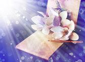 モクレンの花と古い本 — ストック写真