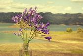 Kleine lila blüten — Stockfoto