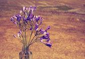 Fialové kvítky — Stock fotografie