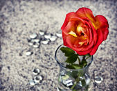Red rose in a glass vase — Stock Photo
