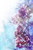 Beautiful cherry tree flowers — Stockfoto