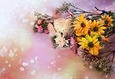 Chamomile, yellow and white chrysanthemum — Stock Photo