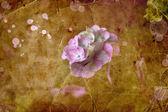 Mooie roze bloemen — Stockfoto