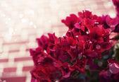Heldere rode bloemen — Stockfoto