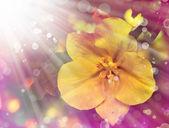 Gele bloem — Stockfoto