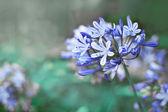 Blue flowers with sunshine — Foto de Stock