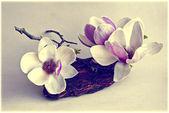 Flores de magnólia — Fotografia Stock