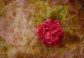 美しいバラと休日ビンテージ カード — ストック写真