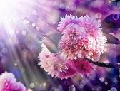 Beautiful cherry tree flowers — Стоковое фото