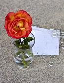 Red rose in glass vase — Stock Photo