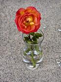Rode roos in glazen vaas — Stockfoto