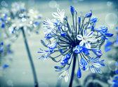 Blue flowers with sunshine — Stock Photo