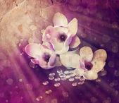 白玉兰花 — 图库照片