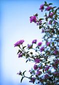 Krásné růžové kvítky — Stock fotografie