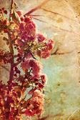Beautiful cherry tree flowers — ストック写真
