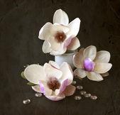 Magnolia flowers — Stockfoto