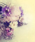 Chamomile and white chrysanthemum — Foto de Stock