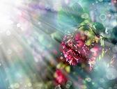 Little beautiful pink flowers — Stock Photo