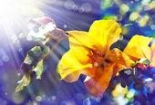 žluté květy — Stock fotografie