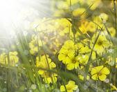 Yellow blumen — Stockfoto