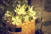 Beautiful white flowers with basket — Stock Photo