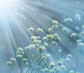 Little white flowers with sunshine — Stock Photo