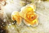 Roses jaunes — Photo