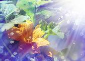 Gul blomma — Stock fotografie