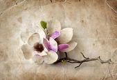 Fondo de primavera con flores de magnolia — Foto de Stock