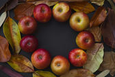 Autumn background with Red apples — Stock Photo