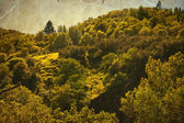 Spring landscape with sunshine — Stock Photo