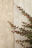 Concrete wall with tree branches — Stock Photo