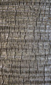 Coco palm detail bark texture — Stock Photo